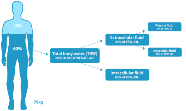 Water in the body.png