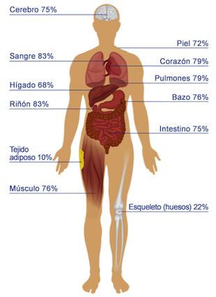 Como calcular cuantos litros de sangre tiene el cuerpo humano