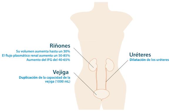 tracto-urinario_2013-10-14_a_15.03.01.png